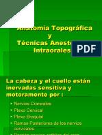 anestesia y anatomia
