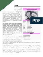Orthocoronavirinae