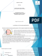 Presentación1 sensacion y percepcion.pptx
