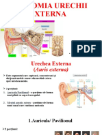Urechea-Externa