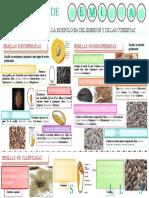 INFOGRAFIA CLASIFICACION DE SEMILLAS.docx