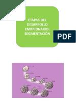 3. Etapas del desarrollo - segmentación