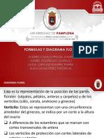 DIAGRAMA FLORAL Y FORMULAS(1)