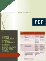 Actividad-2 Cuadro Comparativo Sobre La Estructura y Función de Las Células Del Sistema Nervioso
