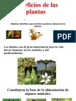 Beneficios de las plantas.pptx