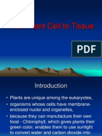 Plant Cell to Tissue