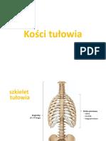 Kości tułowia