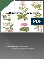 ядовитые растения.ppt