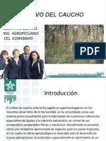 cultivodelcauchosena-140204225339-phpapp01