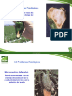 Manejo Nutricional en Ajies y Especies Afines B