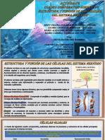 Cuadro Comparativo - Estructura Funcion Sistema Nervioso