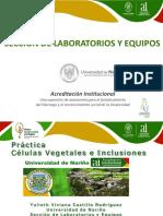 2. Práctica Células Vegetales e Inclusiones.pdf