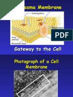 MYP4_Plasma-Membrane