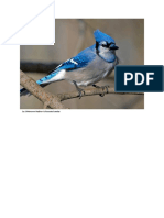 birds.docx