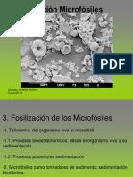 03_Fosilizacion microfosiles.pdf