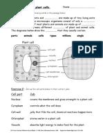 KS3 Science Revision Worksheets Cells