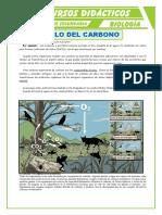 Ciclo-del-Carbono-2-para-Primero-de-Secundaria.doc