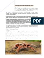 SIGNIFICADO DE ANIMALES INVERTEBRADOS-