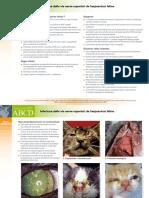 IT_FHV_Infezione_delle_vie_aeree_superiori_da_herpesvirus_felino