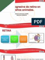 Atrofia progresiva de retina en pequeños animales kevin bejarano