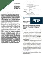 Examen Físico Nefritico PDF