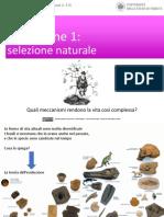 Andrea Baucon, Corso Di Paleontologia - Lezione 10 - Evoluzione 1 (Selezione Naturale)