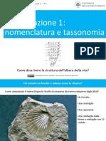 Andrea Baucon, Corso Di Paleontologia - Lezione 13 - Classificazione 1 (Nomenclatura e Tassonomia)