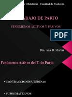 fenom_activ_y_pasivos_del_TP