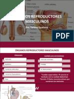 Genitales Masculinos_6c018edbb9b674134cddca6670c276c0