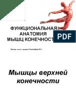 Функциональная анатомия мышц конечностей