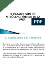 METABOLISMO DEL NITRÓGENO-ASIMILACIÓN_8ada23f697b89f0fa612e39abd536d7d.ppt