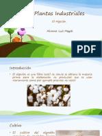 Plantas Industriales - el algodon