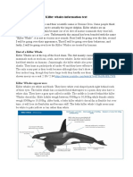 killer whales information