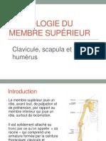 1_ostéologie membre supérieur I