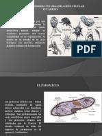 Microorganismo_con_organización_Eucariota[2] [Reparado]