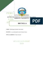 Resumen de Brunella