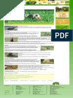 Kaninchen  Tierlexikon für Kinder - Archiv  SWR Kindernetz OLI's Wilde Welt