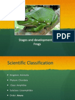 Stages and development of Frogs2