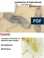 campylobacterhelicobacter-161026021438