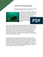 Trabajadores Submarinos de la Patagonia en peligro.