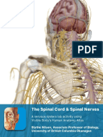 lab_manual_spinal_cord_and_spinal_nerves_atlas_7-9-19 2.pdf