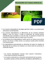Depredadores de plagas Agricolas