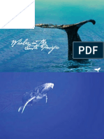 Whales in the South Pacific