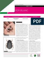 Fiche-phyto-ver-blanc.pdf