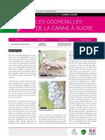 fiche-phyto_cochenille-final