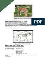 Anatomy of Tiger