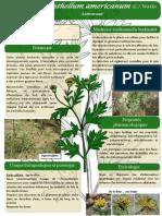 Chrysanthellum-americanum-affiche-Burkina.pdf