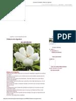 procesos de textiles_ hilatura de algodon