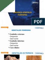 APARATO REPRODUCTOR FEMENINO (3)