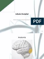 Lobulo Occipital.pptx